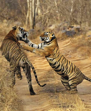 CONFIRM Ranthambore jeep safari booking in your favorite Zone 1 to 6